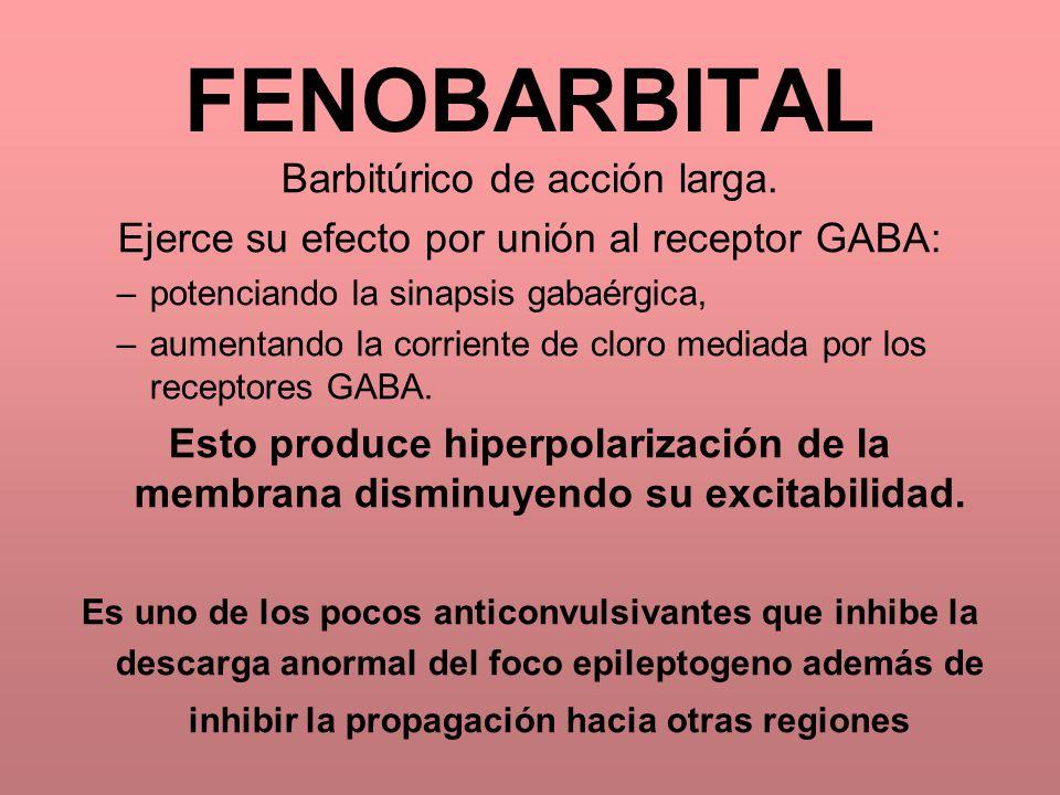 FENOBARBITAL Barbitúrico de acción larga. Ejerce su efecto por unión al receptor GABA: –potenciando la sinapsis gabaérgica, –aumentando la corriente d