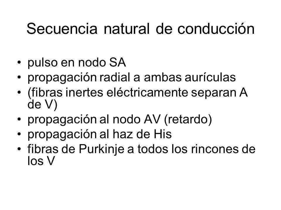 Secuencia natural de conducción pulso en nodo SA propagación radial a ambas aurículas (fibras inertes eléctricamente separan A de V) propagación al nodo AV (retardo) propagación al haz de His fibras de Purkinje a todos los rincones de los V