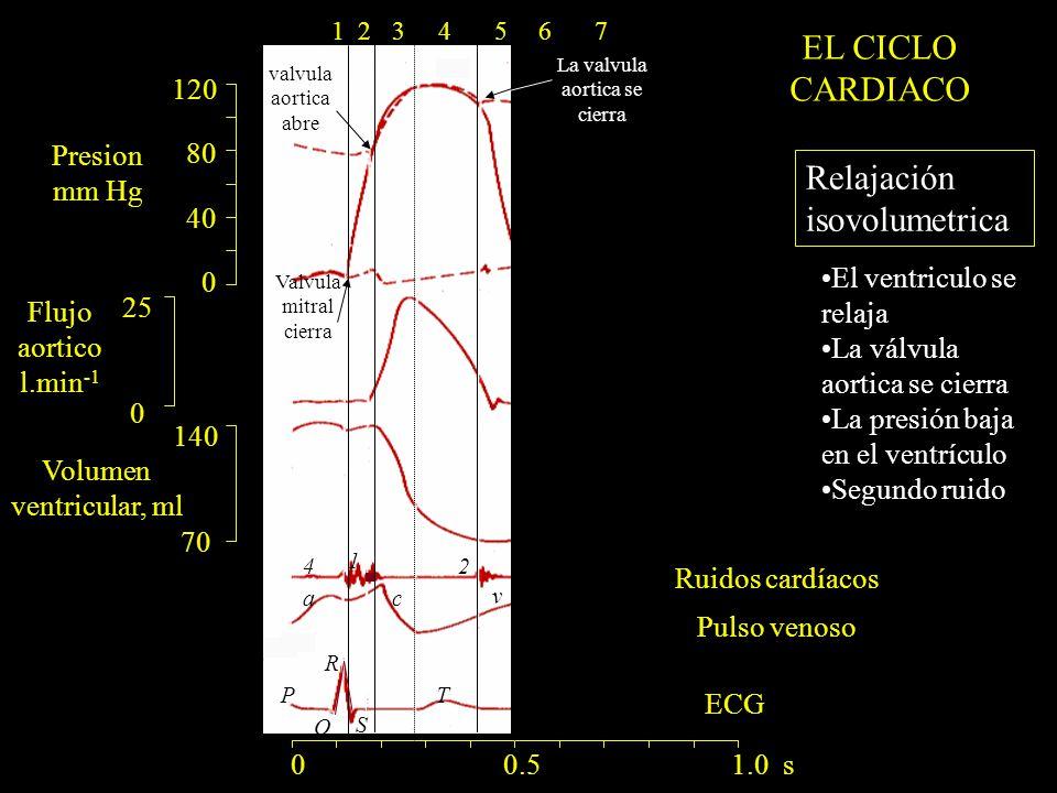 120 80 40 0 140 70 25 0 ac v R Q S PT 1 24 Valvula mitral cierra valvula aortica abre La valvula aortica se cierra 0 0.5 1.0 s 1234567 Relajación isovolumetrica El ventriculo se relaja La válvula aortica se cierra La presión baja en el ventrículo Segundo ruido Presion mm Hg Flujo aortico l.min -1 Volumen ventricular, ml Ruidos cardíacos Pulso venoso EL CICLO CARDIACO ECG