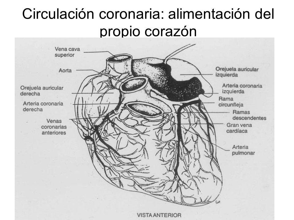 Ingeniería Biomédica Curso ppt video online descargar