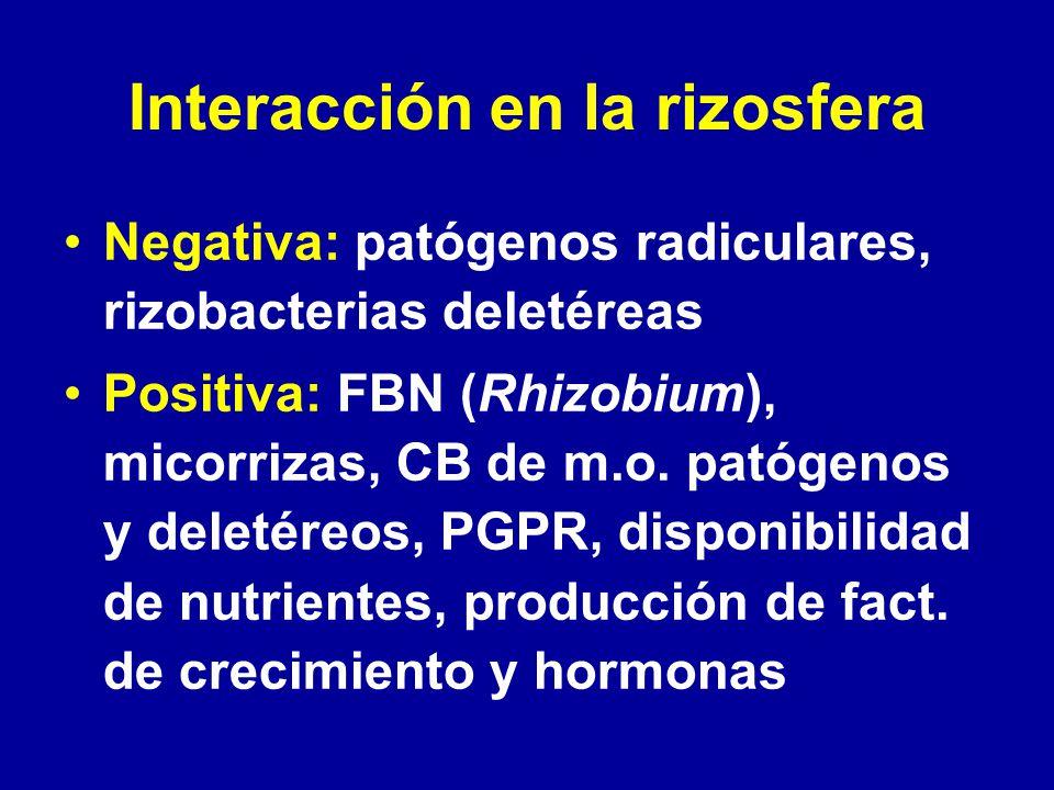 Interacción en la rizosfera Negativa: patógenos radiculares, rizobacterias deletéreas Positiva: FBN (Rhizobium), micorrizas, CB de m.o. patógenos y de