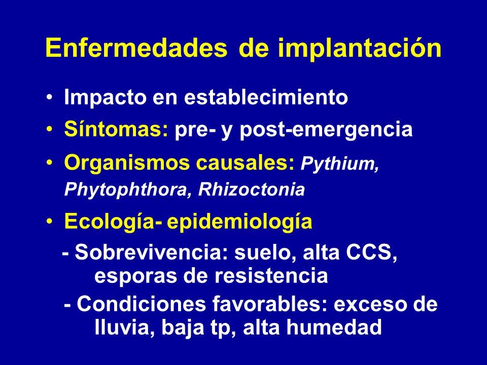 Enfermedades de implantación Impacto en establecimiento Síntomas: pre- y post-emergencia Organismos causales: Pythium, Phytophthora, Rhizoctonia Ecolo