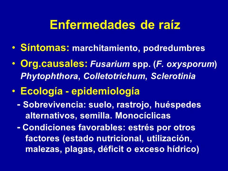Enfermedades de raíz Síntomas: marchitamiento, podredumbres Org.causales: Fusarium spp. (F. oxysporum) Phytophthora, Colletotrichum, Sclerotinia Ecolo