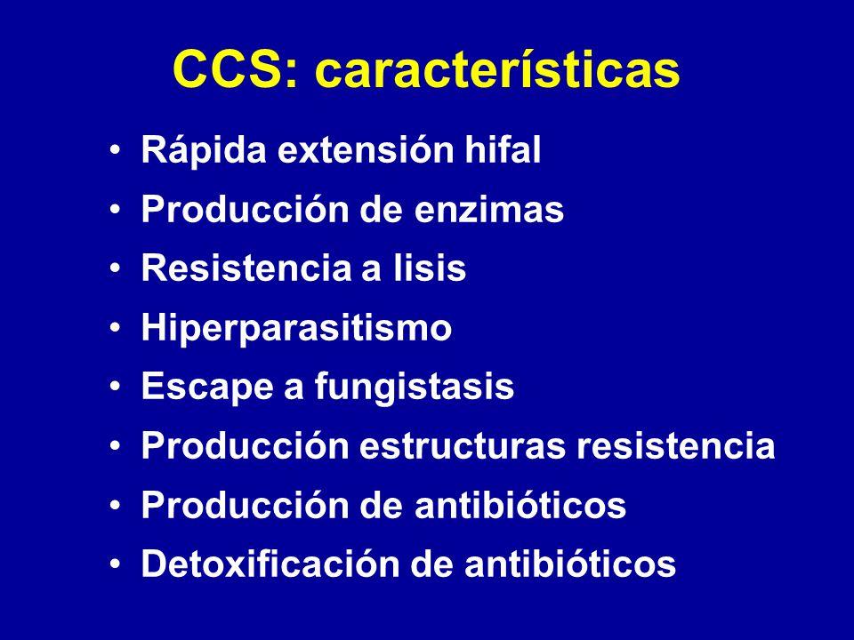 CCS: características Rápida extensión hifal Producción de enzimas Resistencia a lisis Hiperparasitismo Escape a fungistasis Producción estructuras res