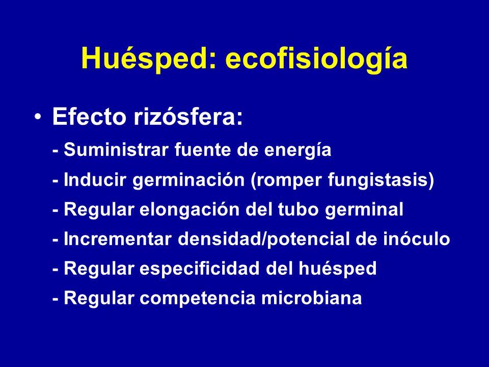 Huésped: ecofisiología Efecto rizósfera: - Suministrar fuente de energía - Inducir germinación (romper fungistasis) - Regular elongación del tubo germ