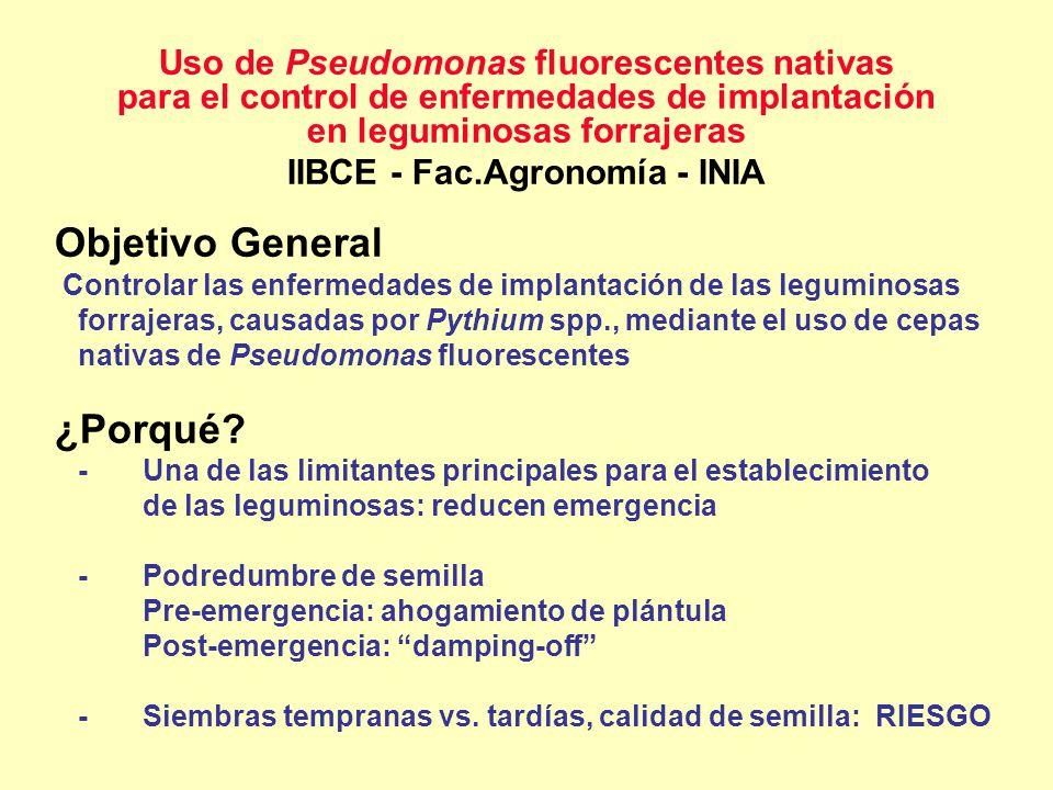 Uso de Pseudomonas fluorescentes nativas para el control de enfermedades de implantación en leguminosas forrajeras IIBCE - Fac.Agronomía - INIA Objeti