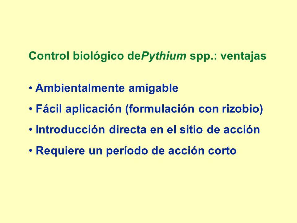 Control biológico dePythium spp.: ventajas Ambientalmente amigable Fácil aplicación (formulación con rizobio) Introducción directa en el sitio de acci