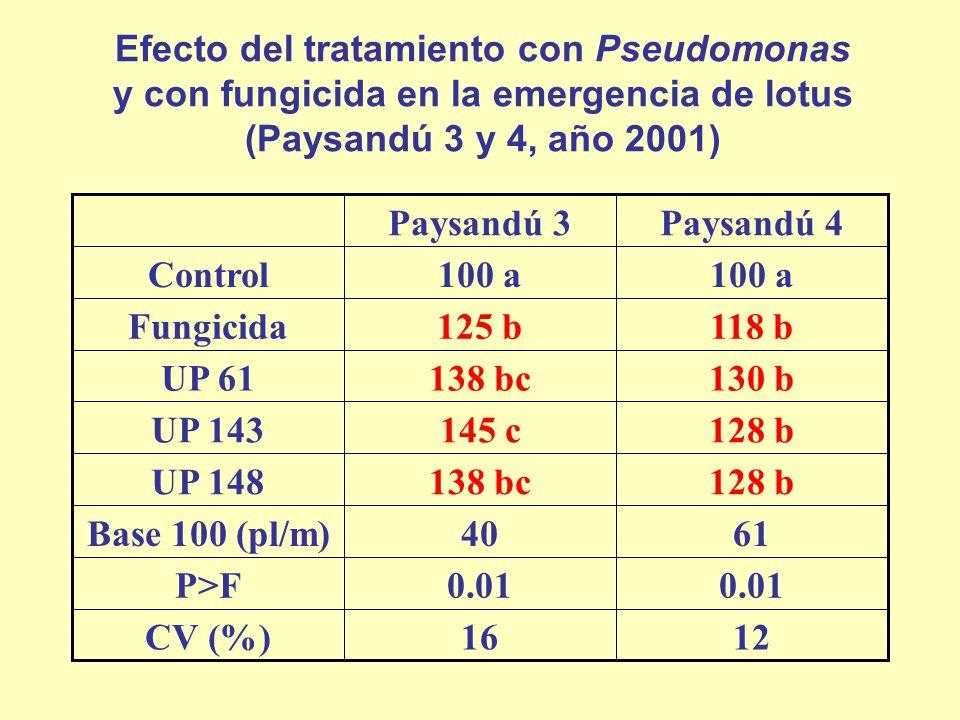 Efecto del tratamiento con Pseudomonas y con fungicida en la emergencia de lotus (Paysandú 3 y 4, año 2001) 1216CV (%) 0.01 P>F 6140Base 100 (pl/m) 12