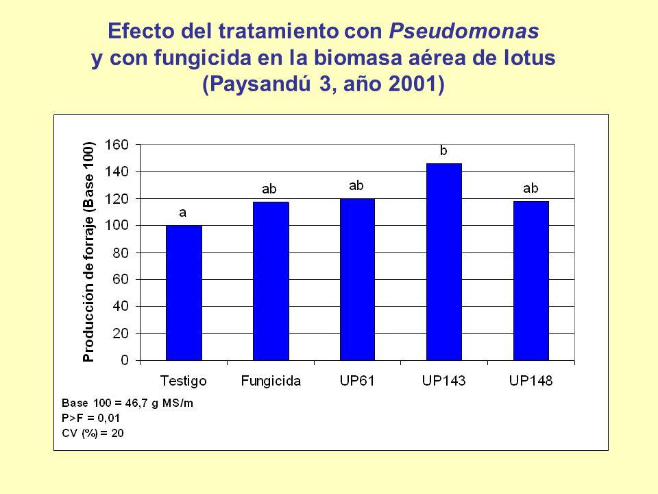 Efecto del tratamiento con Pseudomonas y con fungicida en la biomasa aérea de lotus (Paysandú 3, año 2001)