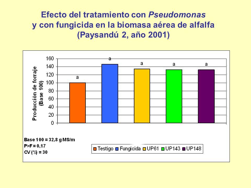 Efecto del tratamiento con Pseudomonas y con fungicida en la biomasa aérea de alfalfa (Paysandú 2, año 2001)