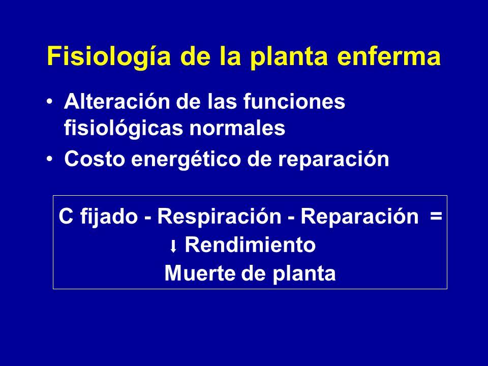 Fisiología de la planta enferma Alteración de las funciones fisiológicas normales Costo energético de reparación C fijado - Respiración - Reparación =