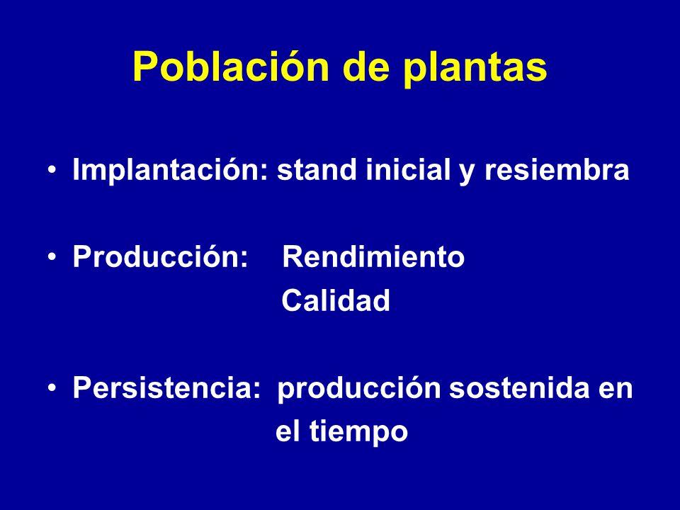 Población de plantas Implantación: stand inicial y resiembra Producción: Rendimiento Calidad Persistencia: producción sostenida en el tiempo