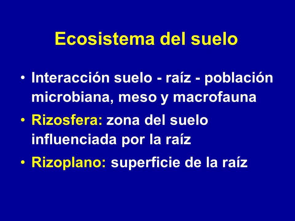 Ecosistema del suelo Interacción suelo - raíz - población microbiana, meso y macrofauna Rizosfera: zona del suelo influenciada por la raíz Rizoplano: