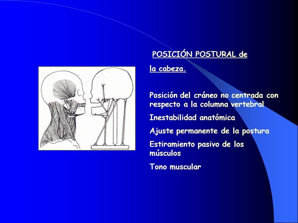EQUILIBRIO FUNCIONAL MÚSCULO TEMPORAL APÓFISIS CORONOIDES