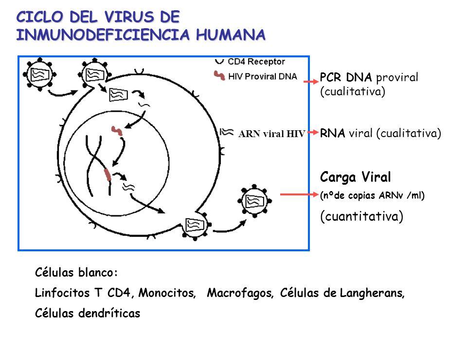 PCR DNA proviral (cualitativa) RNA viral (cualitativa) Carga Viral (nºde copias ARNv /ml) (cuantitativa) CICLO DEL VIRUS DE INMUNODEFICIENCIA HUMANA C