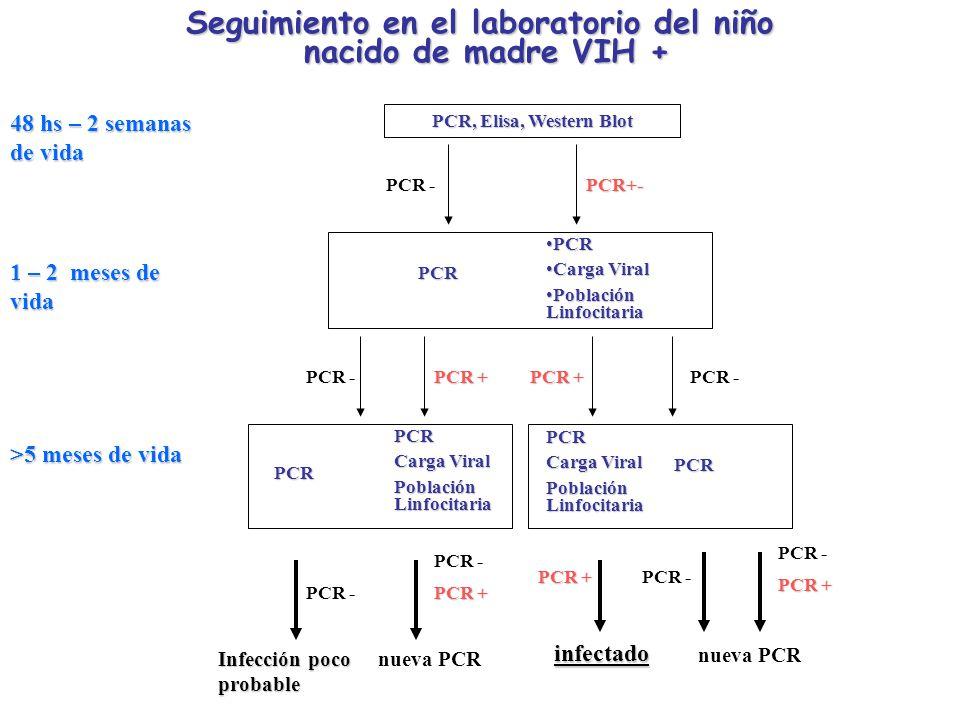 Seguimiento en el laboratorio del niño nacido de madre VIH + nacido de madre VIH + PCR, Elisa, Western Blot PCR -PCR+- PCRPCR Carga ViralCarga Viral P