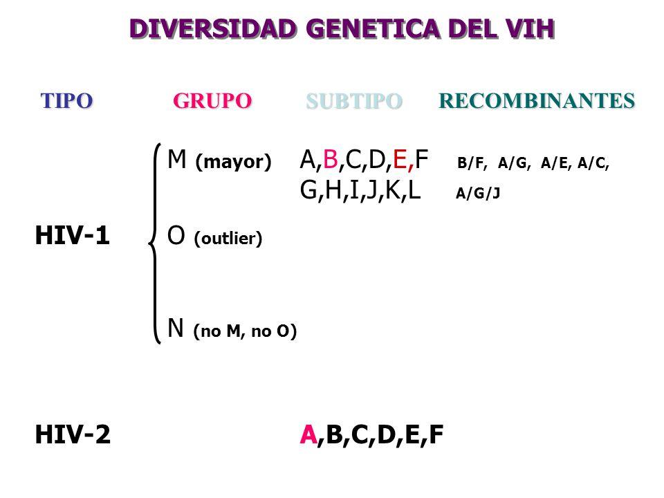 TIPOGRUPOSUBTIPORECOMBINANTES M (mayor) A,B,C,D,E,F B/F, A/G, A/E, A/C, G,H,I,J,K,L A/G/J HIV-1O (outlier) N (no M, no O) HIV-2A,B,C,D,E,F DIVERSIDAD
