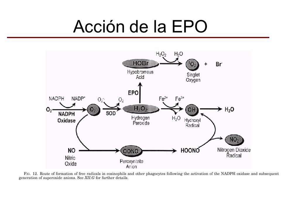 Acción de la EPO
