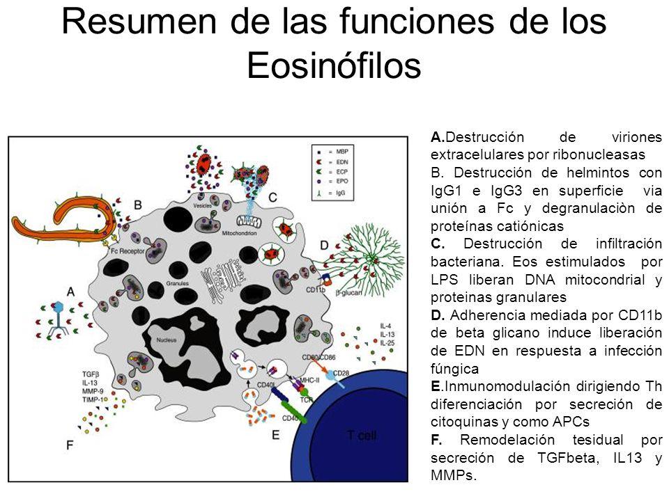 Resumen de las funciones de los Eosinófilos A.Destrucción de viriones extracelulares por ribonucleasas B. Destrucción de helmintos con IgG1 e IgG3 en
