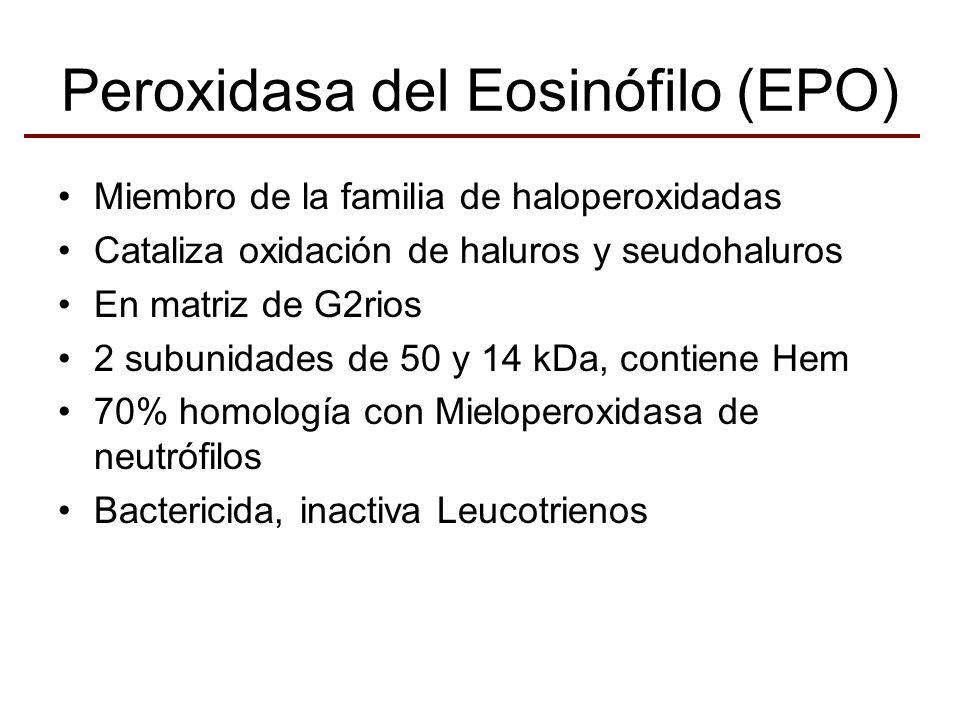 Peroxidasa del Eosinófilo (EPO) Miembro de la familia de haloperoxidadas Cataliza oxidación de haluros y seudohaluros En matriz de G2rios 2 subunidade
