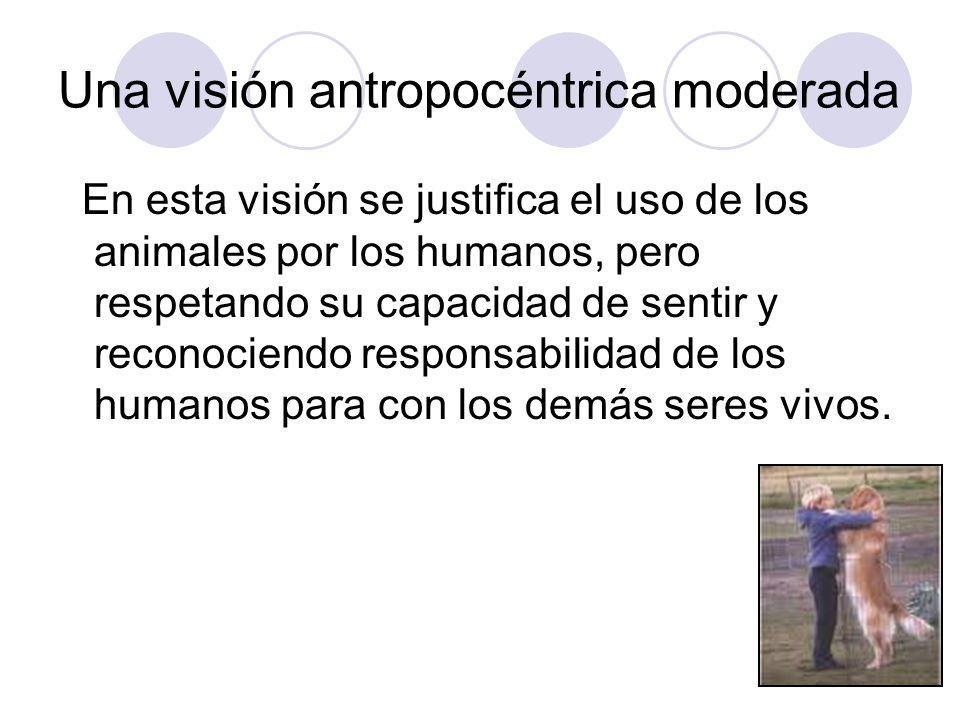 Una visión antropocéntrica moderada En esta visión se justifica el uso de los animales por los humanos, pero respetando su capacidad de sentir y recon