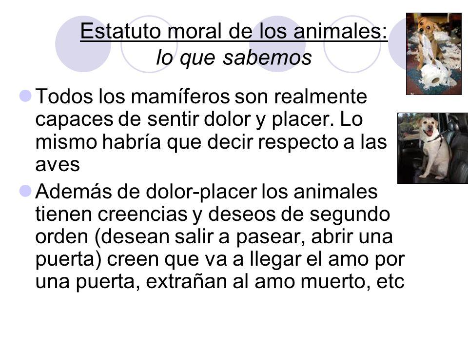 Estatuto moral de los animales: lo que sabemos Todos los mamíferos son realmente capaces de sentir dolor y placer. Lo mismo habría que decir respecto