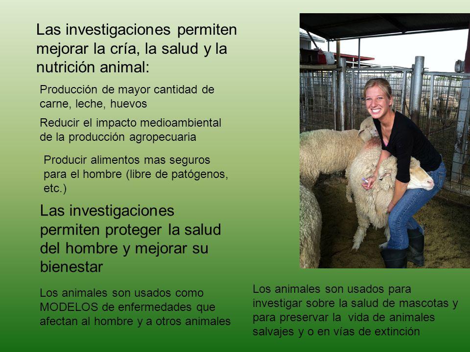 Las investigaciones permiten mejorar la cría, la salud y la nutrición animal: Producción de mayor cantidad de carne, leche, huevos Reducir el impacto