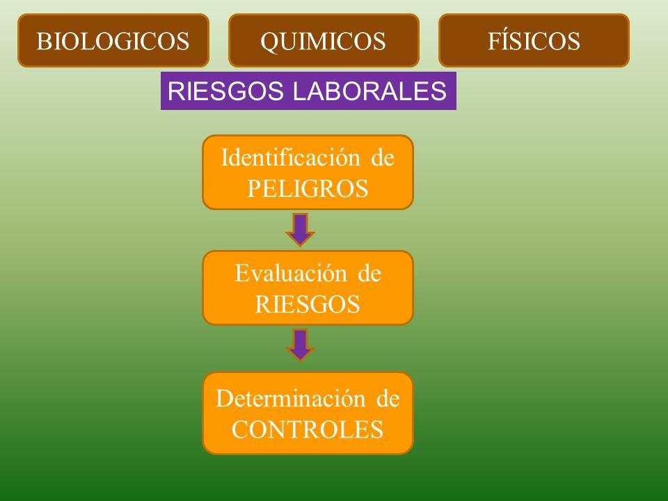RIESGOS LABORALES Identificación de PELIGROS Evaluación de RIESGOS Determinación de CONTROLES BIOLOGICOSQUIMICOSFÍSICOS