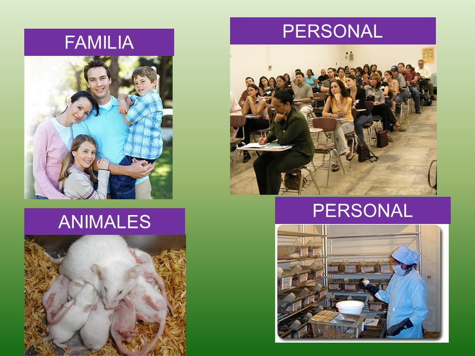 FAMILIA PERSONAL ANIMALES