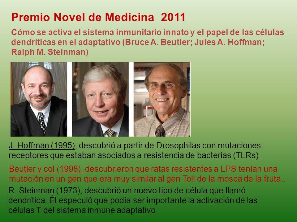 Premio Novel de Medicina 2011 Cómo se activa el sistema inmunitario innato y el papel de las células dendríticas en el adaptativo (Bruce A. Beutler; J