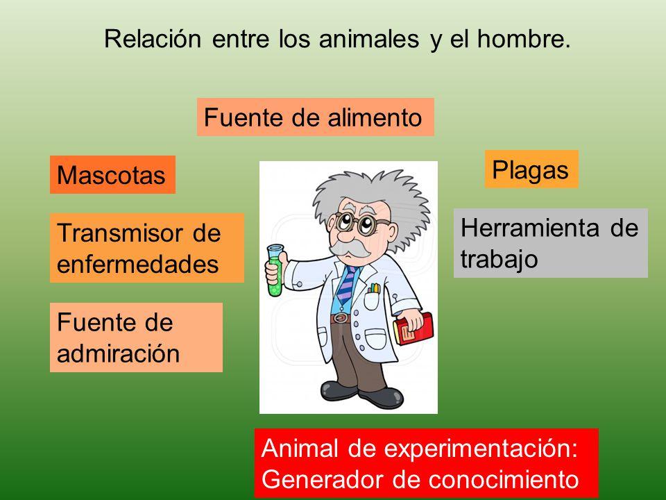 Fuente de alimento Mascotas Plagas Relación entre los animales y el hombre. Transmisor de enfermedades Fuente de admiración Animal de experimentación: