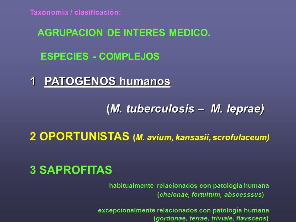 TUBERCULOSIS curso F.de M. cefa 2007