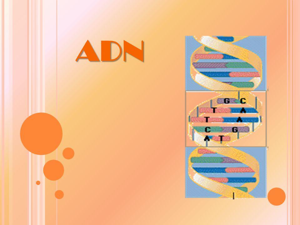 ¿Q UÉ ES EL ADN.