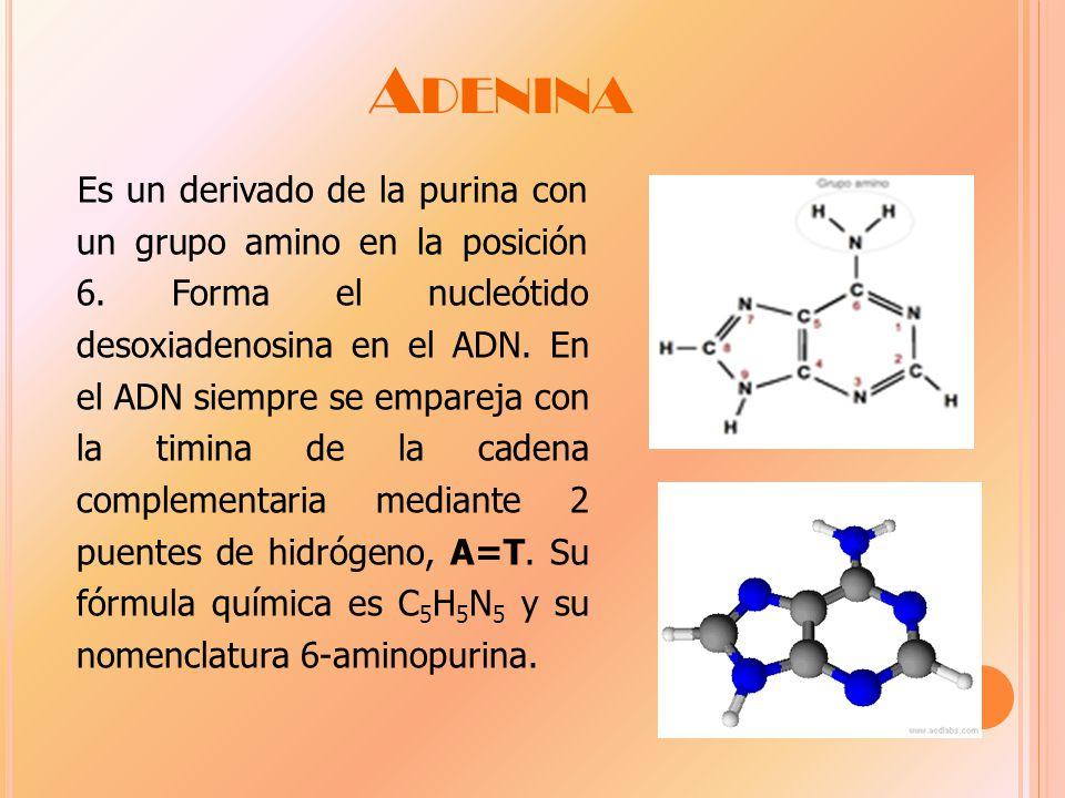 A DENINA Es un derivado de la purina con un grupo amino en la posición 6.