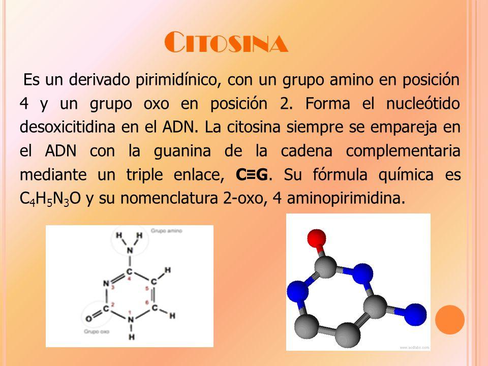 C ITOSINA Es un derivado pirimidínico, con un grupo amino en posición 4 y un grupo oxo en posición 2.