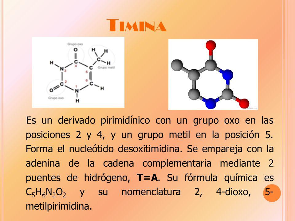 T IMINA Es un derivado pirimidínico con un grupo oxo en las posiciones 2 y 4, y un grupo metil en la posición 5.