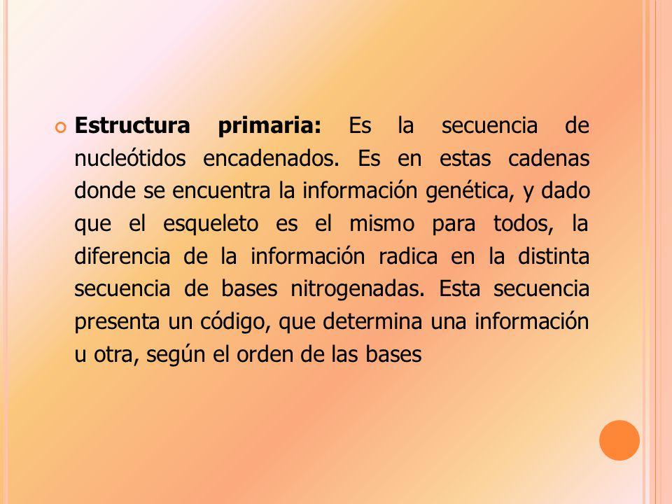 Estructura primaria: Es la secuencia de nucleótidos encadenados.