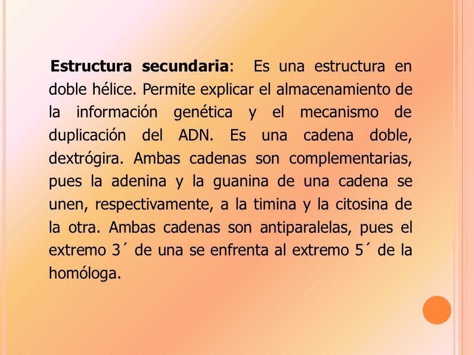 Estructura secundaria: Es una estructura en doble hélice.