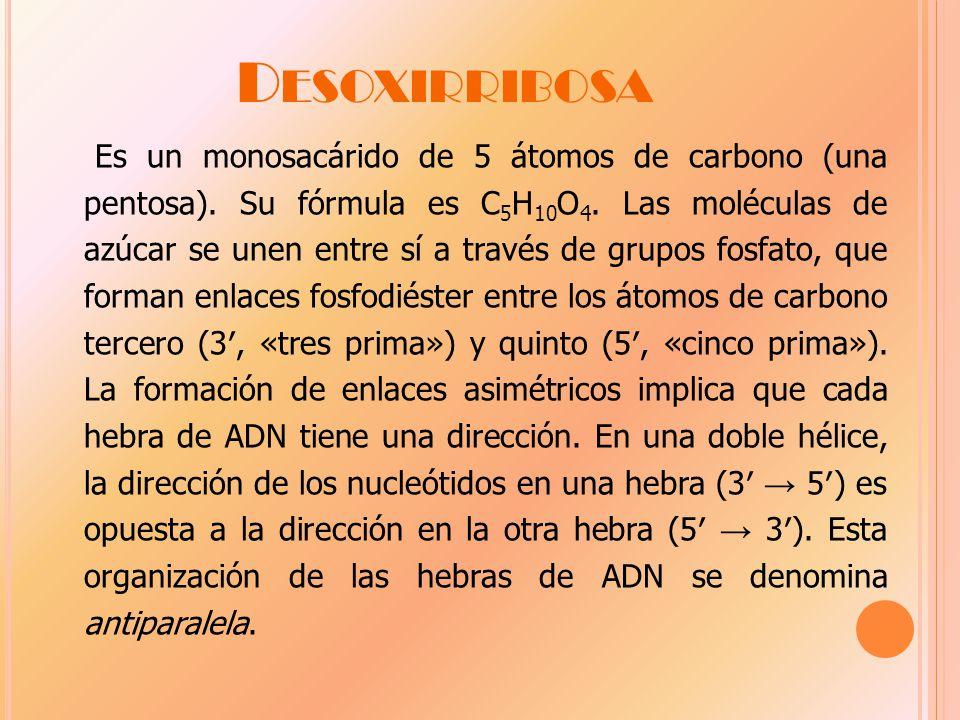 D ESOXIRRIBOSA Es un monosacárido de 5 átomos de carbono (una pentosa).