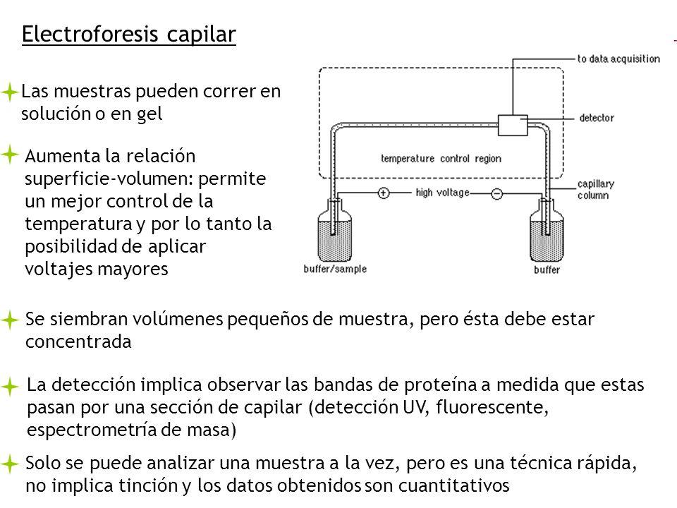 Electroforesis capilar Aumenta la relación superficie-volumen: permite un mejor control de la temperatura y por lo tanto la posibilidad de aplicar vol