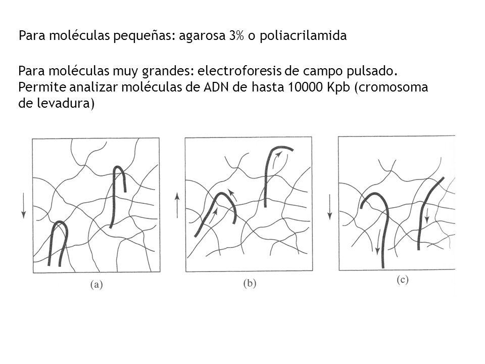 Para moléculas pequeñas: agarosa 3% o poliacrilamida Para moléculas muy grandes: electroforesis de campo pulsado. Permite analizar moléculas de ADN de