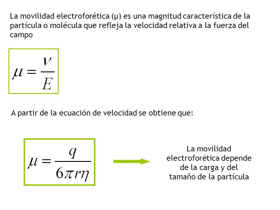 La movilidad electroforética (μ) es una magnitud característica de la partícula o molécula que refleja la velocidad relativa a la fuerza del campo A partir de la ecuación de velocidad se obtiene que: La movilidad electroforética depende de la carga y del tamaño de la partícula