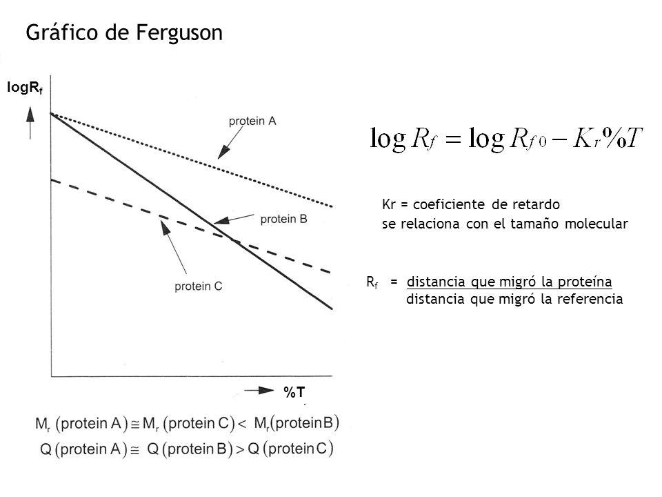 Gráfico de Ferguson R f = distancia que migró la proteína distancia que migró la referencia Kr = coeficiente de retardo se relaciona con el tamaño molecular %T logR f