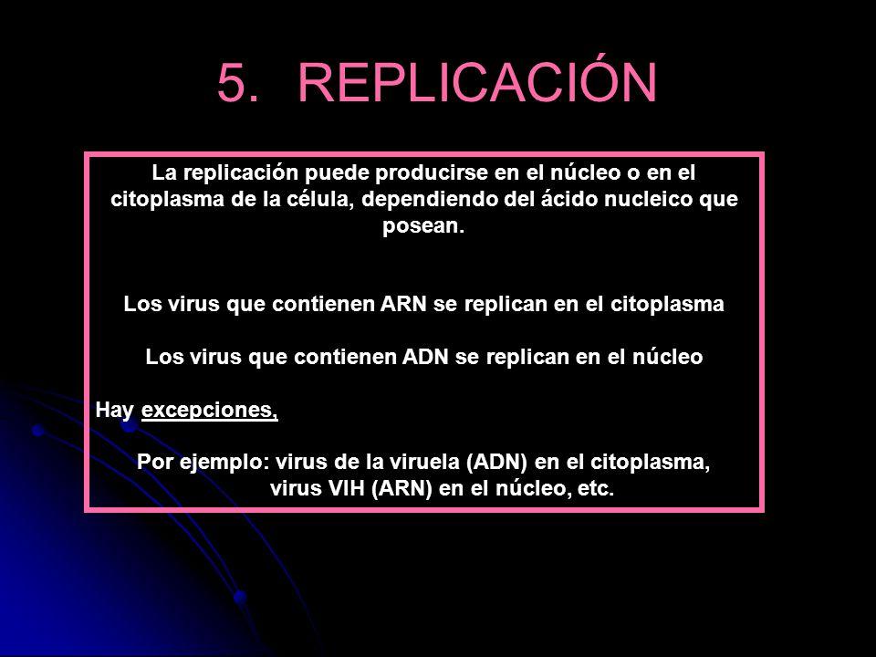 La replicación puede producirse en el núcleo o en el citoplasma de la célula, dependiendo del ácido nucleico que posean. Los virus que contienen ARN s