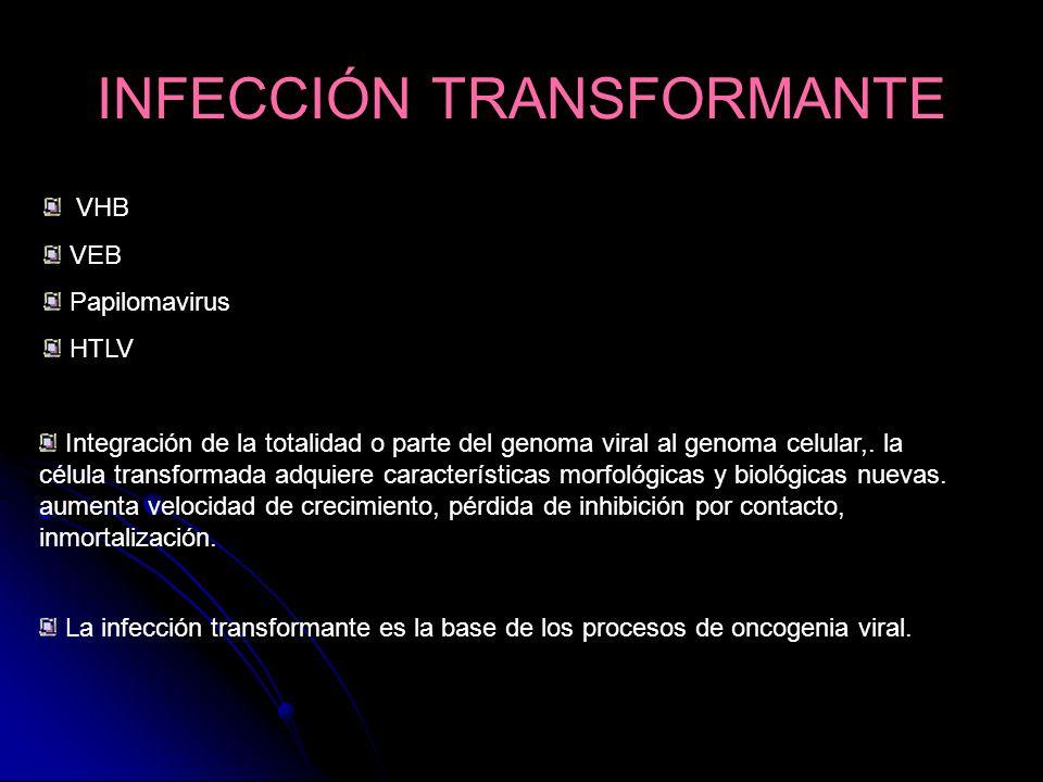 INFECCIÓN TRANSFORMANTE VHB VEB Papilomavirus HTLV Integración de la totalidad o parte del genoma viral al genoma celular,. la célula transformada adq