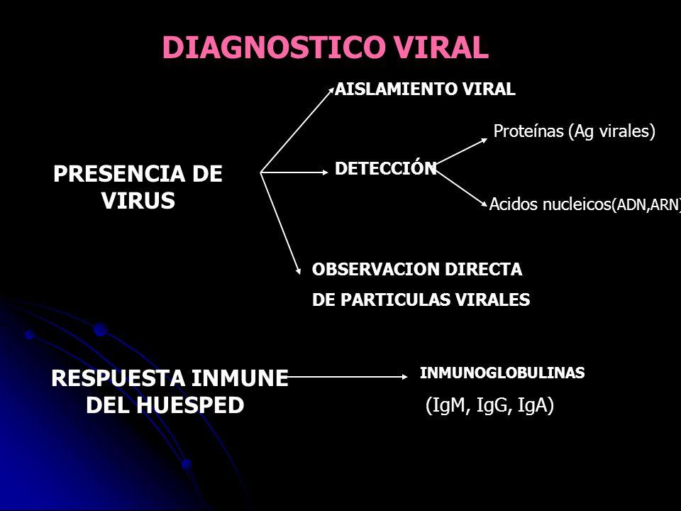 INMUNOGLOBULINAS (IgM, IgG, IgA) DIAGNOSTICO VIRAL PRESENCIA DE VIRUS AISLAMIENTO VIRAL DETECCIÓN Proteínas (Ag virales) Acidos nucleicos (ADN,ARN) OB