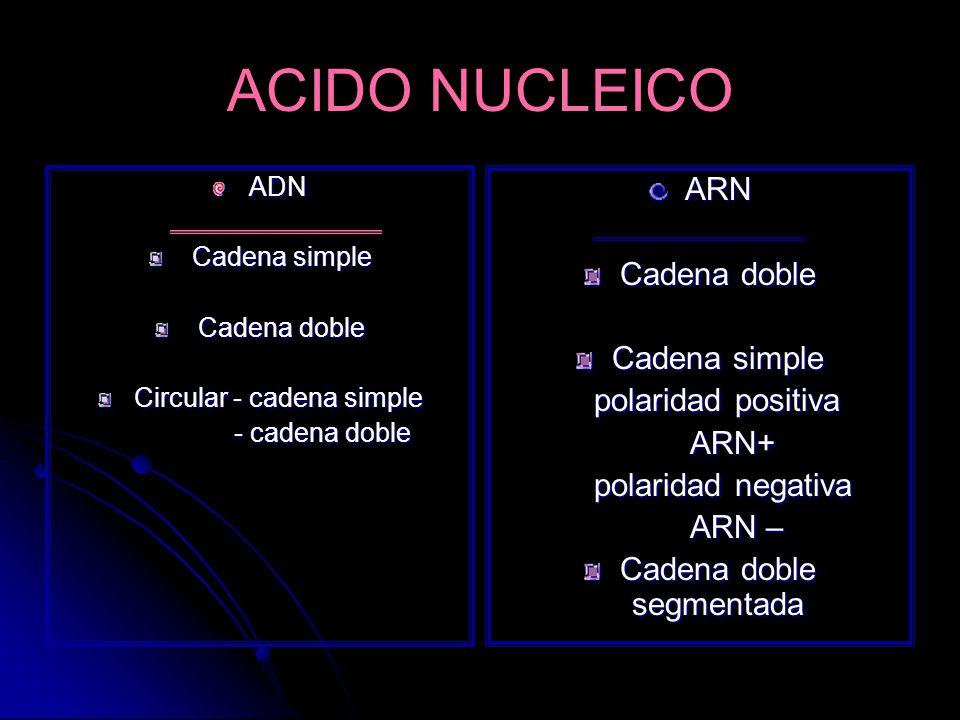 ACIDO NUCLEICO ADN Cadena simple Cadena simple Cadena doble Cadena doble Circular - cadena simple - cadena doble - cadena dobleARN Cadena doble Cadena