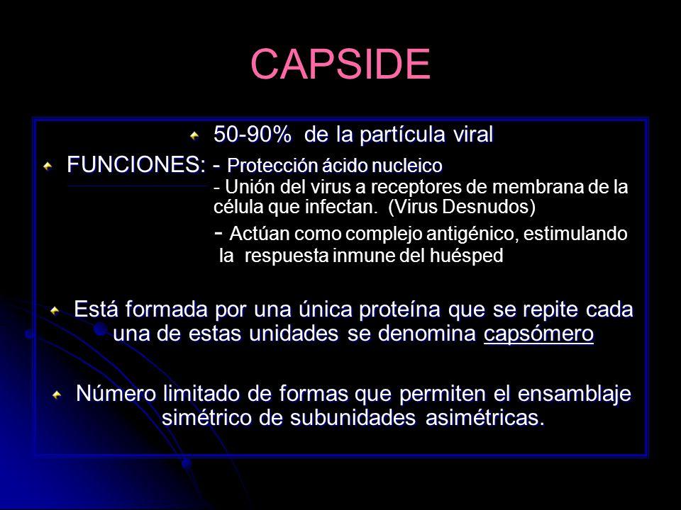 CAPSIDE 50-90% de la partícula viral FUNCIONES: - Protección ácido nucleico - Unión del virus a receptores de membrana de la célula que infectan. (Vir