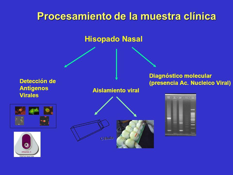 Hisopado Nasal Diagnóstico molecular (presencia Ac. Nucleico Viral) Detección de Antígenos Virales Aislamiento viral Procesamiento de la muestra clíni