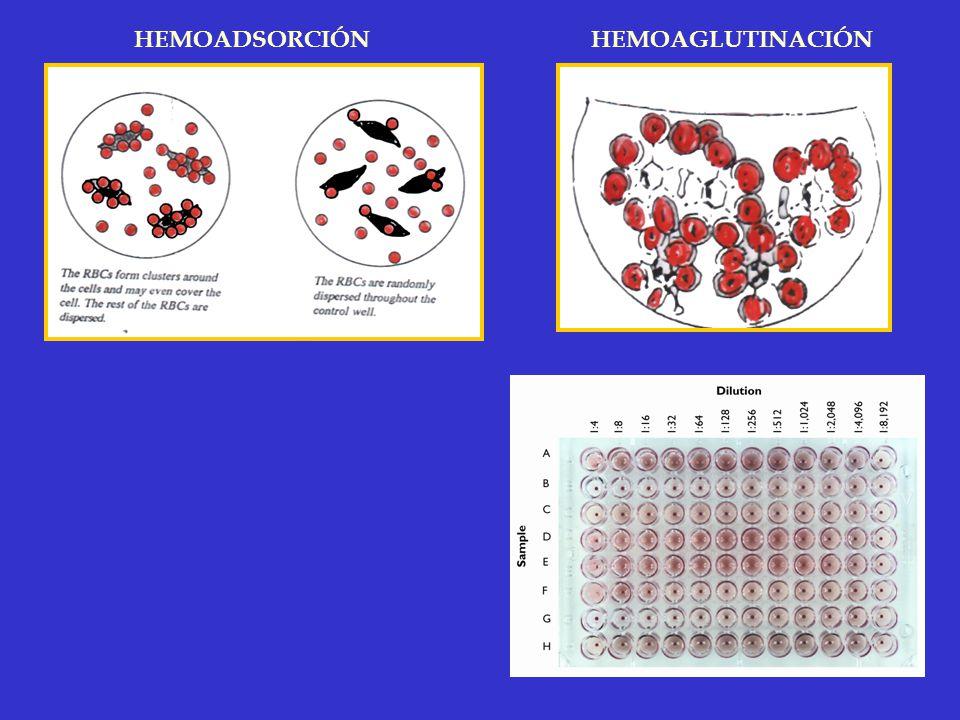 HEMOADSORCIÓNHEMOAGLUTINACIÓN